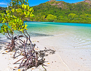 El-nido Prints - Mangroves Print by MotHaiBaPhoto Prints