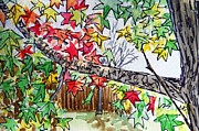 Sketchbook Painting Prints - Maple Tree Sketchbook Project Down My Street Print by Irina Sztukowski
