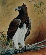 Martial Eagle Paintings - Martial Eagle by Rita Palm