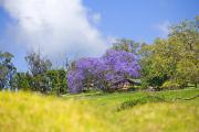 Makawao Photos - Maui Upcountry by Ron Dahlquist - Printscapes