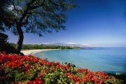 Mauna Kea Photo Posters - Mauna Kea Beach Poster by Dana Edmunds - Printscapes