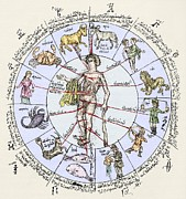Labelled Prints - Medical Zodiac, 15th Century Diagram Print by Sheila Terry