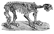 Prehistory Prints - Megatherium, Cenozoic Mammal Print by Science Source