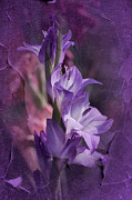 Gladiola Prints - Melancholia Print by Richard Cummings