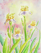 Watercolor Paintings - Mellow Yellow Irises by Kathryn Duncan