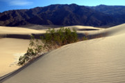 Scenic Drive Prints - Mesquite Sand dunes in Death Valley National park Print by Pierre Leclerc