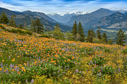 Methow Valley Prints - Methow Valley Spring Print by Bill Johnson