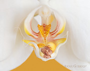 Moth Photos - Mia in Moth Orchid by Anne Geddes