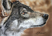 Wolf Pastels Framed Prints - Micha Framed Print by Lucy Swinburne