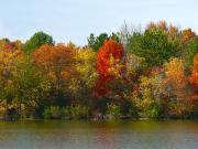 Michigan Fall Colors Posters - Michigan Fall Colors Poster by Scott Hovind