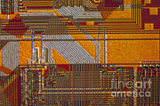 Transmitted Light Micrograph Framed Prints - Microprocessors Framed Print by Michael W. Davidson
