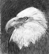 Drawing Of Eagle Drawings - Mighty Eagle by Gail Schmiedlin