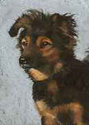 Cute Dog Pastels - Miniature Australian Shepherd by Joyce Geleynse