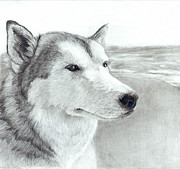 Husky Drawings Prints - Mischief at the Beach Print by CarrieAnn Reda
