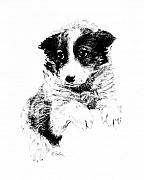 Mutt Drawings - Miss Maggie by Edward Farber