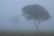 Misty Morning Print by Hein Welman