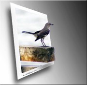 Sfx Photo Prints - Mockingbird Print by Brian Wallace