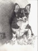 Corgi Drawings - Molly by Nancy Rucker