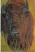 Buffalo Originals - Monarch of the Plains by Dolly Bevan Manion