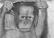 Primate Drawings - Monkey Fun by Gail Schmiedlin