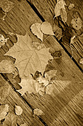 Fallen Leaf Photos - Monochrome Antique Leaf by M K  Miller