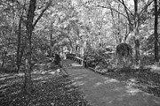 Plants Framed Prints Photos - Monochrome Autumn Foot bridge by M K  Miller