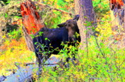 Dogs Digital Art Originals - Moose at Moosehead Lake by Adam Shevron
