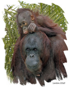 Orangutan Digital Art Metal Prints - Mother And Child Metal Print by Larry Linton