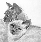 Siamese Cat Print Framed Prints - Mother and Child Framed Print by Susan A Becker