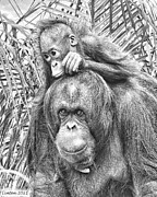 Orangutan Digital Art Framed Prints - Mother And Daughter Framed Print by Larry Linton