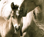 Equine Photography Photos - Mother Love by Tess  Marie