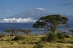 Scenic Framed Prints - Mount Kilimanjaro Framed Print by Michele Burgess