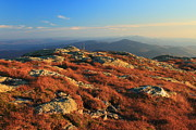 Alpine Zone Photos - Mount Mansfield Alpine Zone Autumn by John Burk
