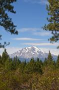 14k Digital Art - Mount Shasta by Daniel Hebard