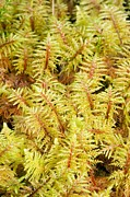 Forest Floor Photos - Mountain Fern Moss by Duncan Shaw