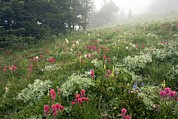 Dewdrops Posters - Mountain Meadow In The Mist Poster by Bob Gibbons