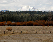Old Fence With Snow Prints - Mountain Meadow Print by Lydia Warner Miller