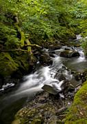 Svetlana Sewell - Mountain River