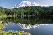 Snow-covered Landscape Posters - Mt Rainier Reflected In Lake Mt Rainier Poster by Tim Fitzharris