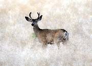 Blending Photos - Mule Deer Buck by Steve McKinzie