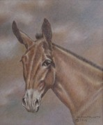 Dorothy Coatsworth Pastels - Mule Head by Dorothy Coatsworth