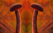 Sweating Digital Art Posters - Mushroom reflection Poster by Odon Czintos