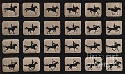 Horse Images Framed Prints - Muybridge Locomotion, Horse Leaping Framed Print by Photo Researchers