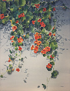 Tendrils Paintings - Nasturtium Cascade by Kate Peper