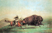 Food Source Prints - Native American Indian Buffalo Hunting Print by Photo Researchers