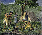1835 Photos - Native American Women: Farming, 1835 by Granger