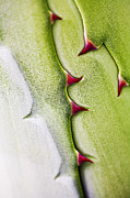 Monocots Photos - Natures Ornaments by Heiko Koehrer-Wagner