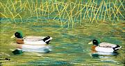 Duck Pastels - Near the reeds by Jan Amiss