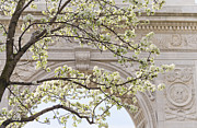 Washington Square Framed Prints - New York City, New York, Close Up Of Blooming Trees In Washington Square Park Framed Print by Tetra Images