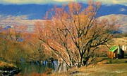 New Zealand Series - Creekside Autumn - South Island Print by Jim Pavelle